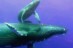 WhaleMomWD